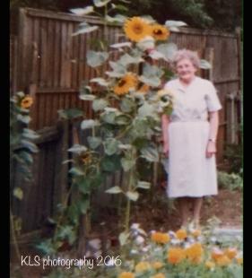 old gardening photo8
