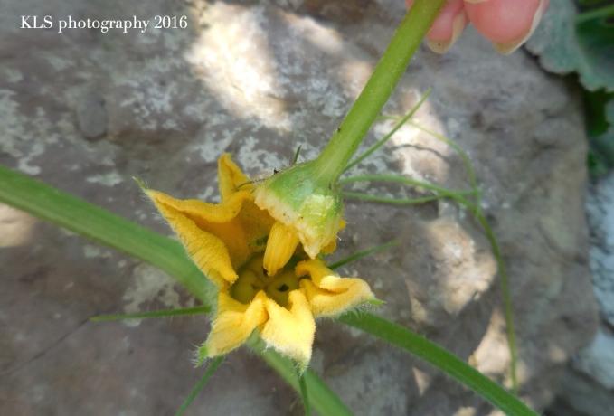 pollinationD