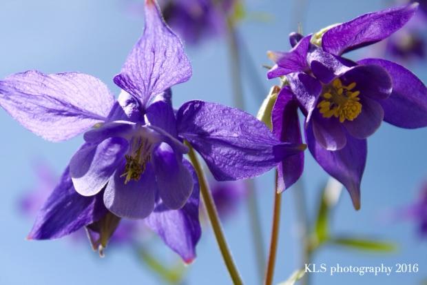 pollinationE
