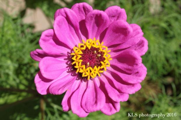 pollinationH
