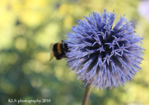 pollinationI