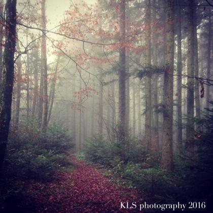 5-uses-autumn-leaves11