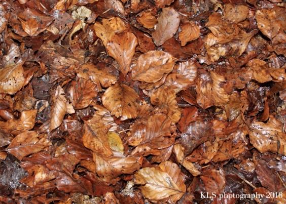 5-uses-autumn-leaves2