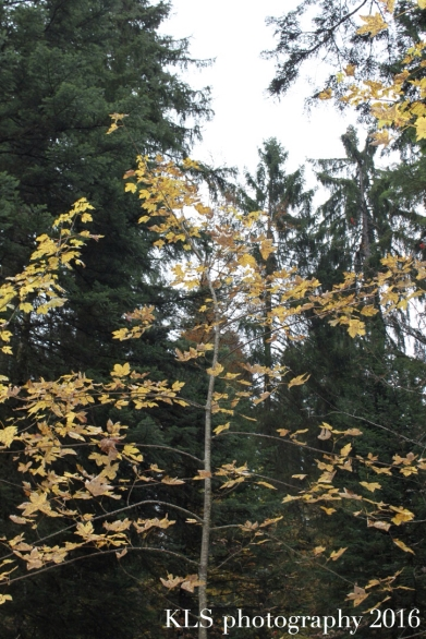 5-uses-autumn-leaves3