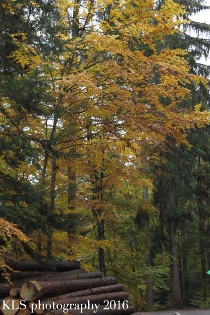 5-uses-autumn-leaves6