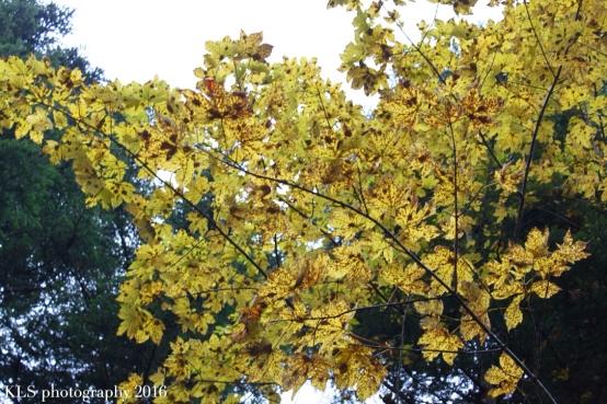 5-uses-autumn-leaves7