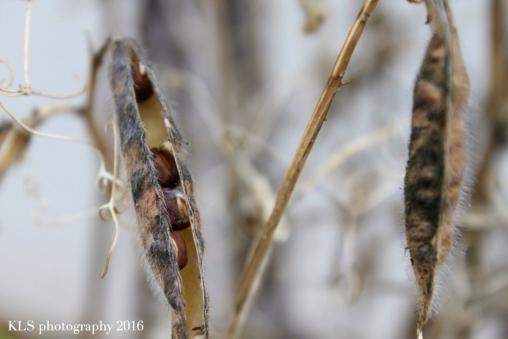 seeds10