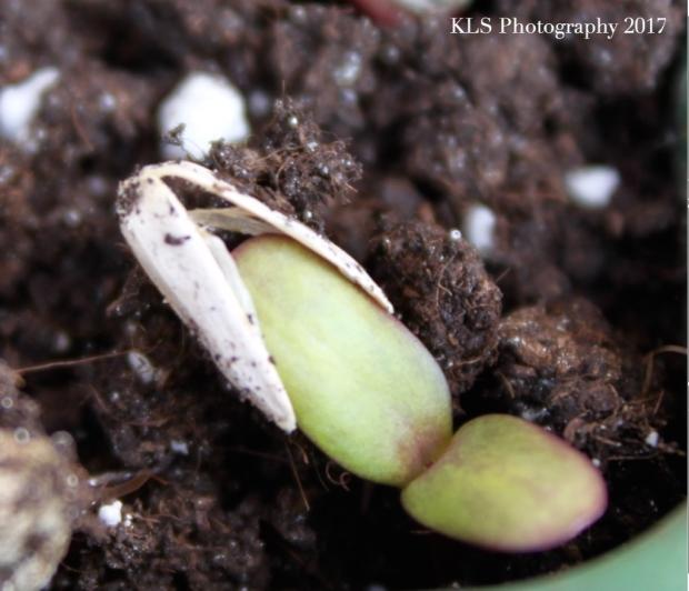 seeds 11