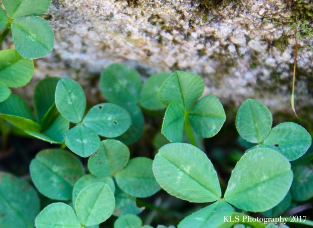 St. Patricks day:mindful 1