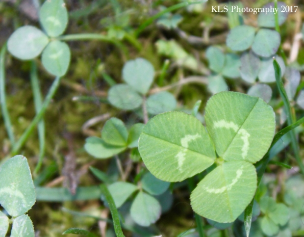 St. Patricks day:mindful3