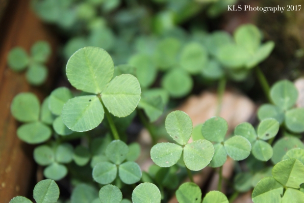 St. Patricks day:mindful6